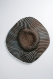 PlacadePared-Fosil