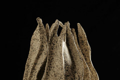 Alga Porcelana Con Manganeso 2013